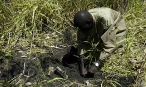 After its formation in October 2010, MAG's Small Arms and Light Weapons Team in South Sudan removed 250,000 items of SALW and unexploded ordnance that were left from the previous wars. Now South Sudan government is accused by the rebels of repeating the same mistake (Photo: MAG)