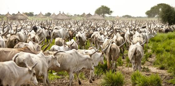 Dinka cattle camp by John Wollwerth, Shutterstock...